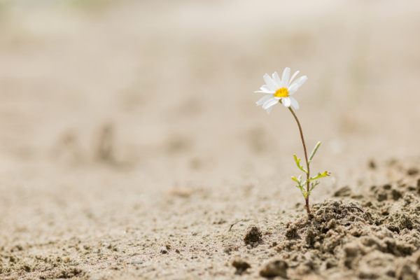 resilienza_blog emozionamente